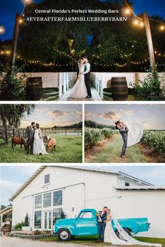 #EverAfterFarmsBlueberryBarn Start Planning Your Dream Wedding Today! Schedule your tour today, to see all that we offer in person! Click for Pricing & Inclusions #marialongphotography @sierrafordphotography Wedding Stuff, Wedding Photos, Wedding Ideas, Blueberry Wedding, Perfect Wedding, Dream Wedding, Aviation Wedding, Epic Pictures, Central Florida