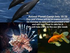 July 15th-19th will be our Animal Planet camp. This year will focus on marine life. 318-242-0042