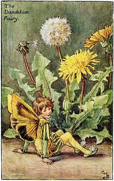 Dandelion FAIRY! Vintage Fairy Digital Illustration. Digital Fairy Printable Image Download. Fairy Digital Print. Cecily Marty Barker.         June 20, 2015 at 08:46AM