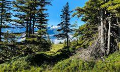 Diesen traumhaften Ausblick auf das Kitzsteinhorn habt ihr bei eurer Wanderung auf dem Pinzgauer Spaziergang oberhalb von Piesendorf Niedernsill! #bergevollerschätze #mountainsfulloftreasures #piesendorf #niedernsill
