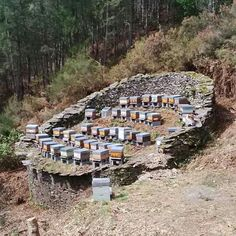 Bee yard w/ stone retaining wall Bee Hives Boxes, Bee Feeder, Bee Hive Plans, Buzzy Bee, Stone Retaining Wall, Bee House, Bee Do, Bee Farm, Garden Bugs