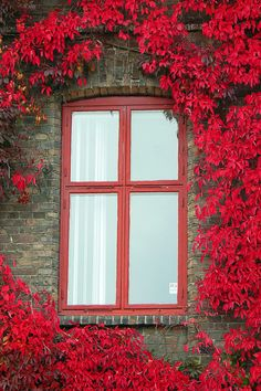 doors, gates, windows and keys Beautiful Flowers, Beautiful Places, Red Flowers, Red Roses, Wall Flowers, Colorful Roses, Window View, Through The Window, Window Boxes