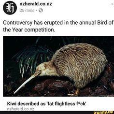 #news, #kiwi, #tumblr, #4chan, #cute