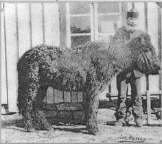 Donkey, Horses, Animals, Animales, Animaux, Donkeys, Horse, Words, Animal