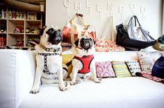 cheengoo pet boutique