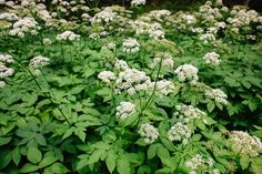 Herb Garden, Garden Plants, Healing Herbs, Parsley, Pesto, Smoothie, Flora, Healthy, Gardening