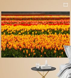 De Tulpenvelden in de omgeving van de Keukenhof zijn beroemd. De tulpenvelden zijn een toeristische attractie en lokt ieder jaar weer miljoenen toeristen. Pumpkin, Canvas, Prints, Flowers, Outdoor, Art, Tela, Outdoors, Art Background