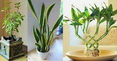 9 piante che depurano l'aria e attraggono energia positiva