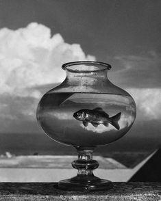 Herbert List's Greek Gods and Humans Andreas Gursky, Intermediate Colors, Herbert List, Goldfish Bowl, Santorini Island, Modern Photography, Magnum Photos, Greek Gods, Old Photos