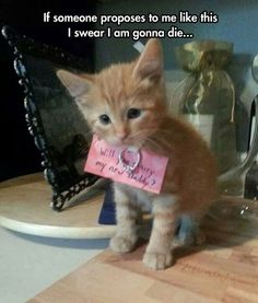 Funny Animal Pictures - View our collection of cute and funny pet videos and pics. New funny animal pictures and videos submitted daily. Cute Kittens, Cats And Kittens, Orange Kittens, Kitty Cats, Cute Funny Animals, Funny Cute, Funniest Animals, Hilarious, Romantic Ways To Propose