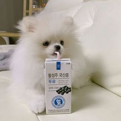 #pomeranian Cute Puppies, Cute Dogs, Dogs And Puppies, Cute Babies, Doggies, Cute Baby Animals, Animals And Pets, Funny Animals, I Love Dogs