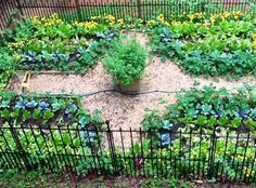 Planting a Fall Garden♥
