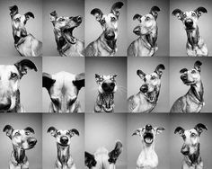 """This is so pawesome!!! """"Odd one out"""" by Elke Vogelsang aka Wieselblitz on 500px"""
