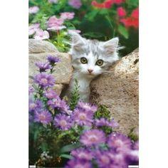 Kitten - Stones Poster 22 X 34 Poster Print, 22x34 (Kitchen) http://www.amazon.com/dp/B0042XF9PC/?tag=wwwmoynulinfo-20 B0042XF9PC