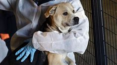 ASPCA makes record seizure of 600 animals from NC no-kill shelter | Fox News
