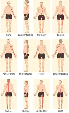 A guide to acupuncture and massages Acupressure Treatment, Acupressure Points, Yin Yang, Meridian Acupuncture, Tai Chi Qigong, Trigger Point Therapy, Yoga Philosophy, Human Anatomy And Physiology, Good Massage