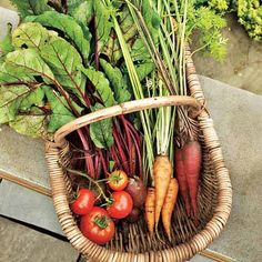 Fresh Vegetables | Gardening