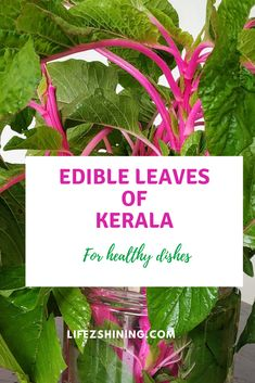 Edible leaves of Kerala for nutritious delicious dishes - Lifezshining Delicious Dishes, Healthy Dishes, Healthy Recipes, Simple Recipes, Kerala Food, Houseplants, Cabbage, Easy Meals, Home And Garden