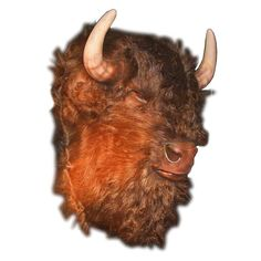 18269ee635e14c Buffalo head figure in resin from Andy Thornton Pub Decor