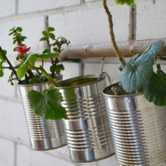 Recycle grocery tins; turn them into green nursery for you plants. Easy!