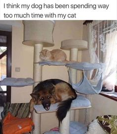 Funny Animal Pictures #10