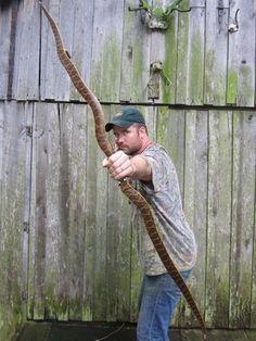 Just Bows! in Archery - Primitive Bows Forum