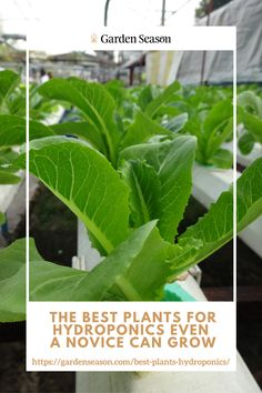 Best Plants for Hydroponics Even a Novice Can Grow | Growing plants hydroponically is a great way to optimize your supply of nutritious crops in the comforts of your home. And let's not forget how it eliminates common soil gardening problems like pests and weeds.