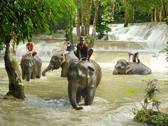Afternoon elephant bathing, tad Sae Waterfall nearby Luang Prabang - Laos.