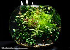 Gorgeous shrimp bowl