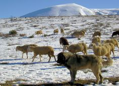 Gora  In the far south of Kosovo, on the slopes of Sare, 25 km south of Prizren, at an altitude of more than 1000 meters are spread over an area of 386.5 square kilometers and 19 highland villages,