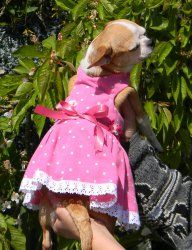 Chihuahua, Summer Dresses, Small Dog Clothes, Petite Clothes, Smallest Dog, Doggies, Animaux, Sundresses, Chihuahua Dogs
