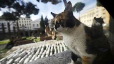 Italian cat brings gifts to his late master's tomb nearly a year after his passing...