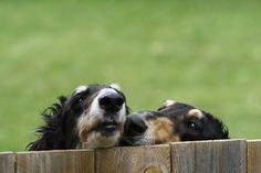nosey boys by Muzik Hounds, via Flickr