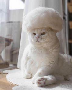 Bonjour InstagramFR! Notre #coeuraveclesdoigts d'aujourd'hui a des doigts de fée: avec Ryo Yamazaki (@rojiman), fini le cauchemar des poils de chat, bonjour les pièces de créateur! Maru (en photo) est l'un des trois félins dont les poils sont recyclés en délicats chapeaux pour chats. Suivez @rojiman pour ne rater aucune des nouveautés de cette cha(t)pelière inspirée. Photo @rojiman