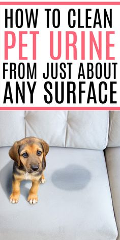 Dealing with pet urine? Check out how to clean up pet urine from just about any surface. Help remove the smell of urine and any staining. Take the pet urine smell out of carpet and more! Homemade Cleaning Products, Cleaning Recipes, Cleaning Hacks, Cleaning Pet Urine, Urine Remover, Urine Stains, Urine Smells, Dog Pee, Carpet Padding