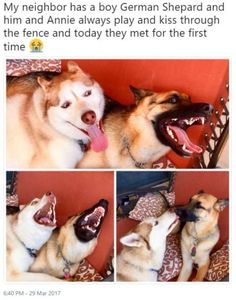 21 Hilariously Funny Animals Pictures For True Pet Lovers http://omgshots.com/3700-21-hilariously-funny-animals-pictures-for-true-pet-lovers.html