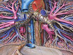 Topographische Anatomie des Menschen illustrated byEduard Pernkopf