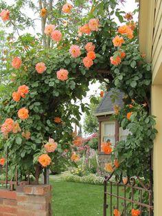 Through the garden gate 2. Cindy Brown Design.