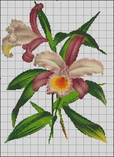 orchid, NO COLOR CHART