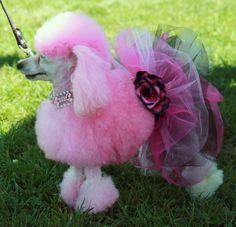 Pink pup!