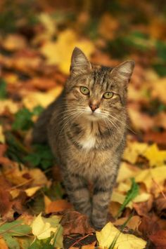 Autumn Kitty.