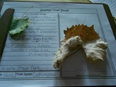 Year Long Tree Study Ideas from @HBNatureStudy