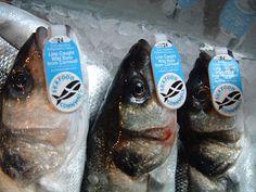 Finding Sushi Grade Fish in London