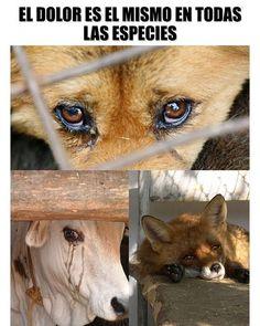 Todos sentimos todos sufrimos #animales #animals #sufrimiento #dolor #crueldad Save Animals, Animals And Pets, Stop Animal Cruelty, Vegan Animals, Mundo Animal, Mo S, Baby Dogs, Cute Funny Animals, Animal Rights