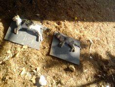 Tu pueblo y demás: Gatos muertos en Calle Jardines de La Carolina.