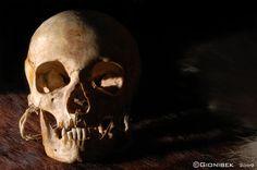 Celtic Skull by gionibek