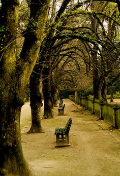 Botanic Garden of the University of Coimbra Beautiful Places To Travel, Wonderful Places, Beautiful Things, Las Azores, Portuguese Culture, Festivals Around The World, Fantasy Places, Europe, Famous Places