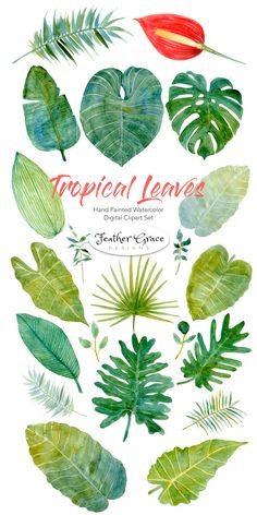 Tropical Leaves & Flowers Designer Clipart Collection. Create the perfect invitation or flier with this versatile kit! #watercolor #watercolors #clipart #tropical #flowers #watercolorflowers #leaves #tropicalleaves