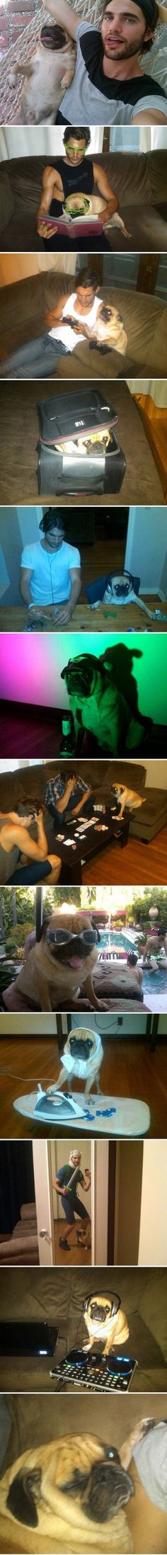 funny-photogenic-pug