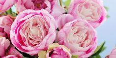 Uitbundig en vrolijk, favoriet van velen en misschien wel één van de mooiste bloemen die er zijn: de pioenroos. En ze zijn gelukkig weer volop te krijgen.Vier feiten over deze bloem en drie tips om ze mooi te houden. De feiten over pioenrozen: Wist je dat er meer dan duizend soorten pioenrozen zijn? Ze komen…